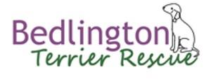 Bedlington Terrier Rescue