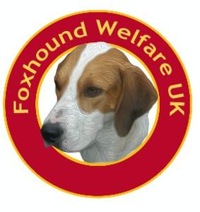 Foxhound Welfare Uk