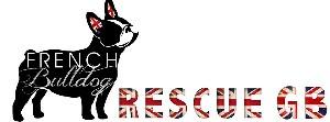 French Bull Dog Rescue Gb