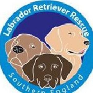 Labrador Retriever Rescue Sothern England